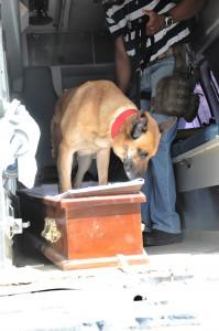 Unidades caninas asistieron a los agentes en las pesquisas.