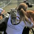 Los gatos son recogidos por los Juegos Olímpicos de Brasil.