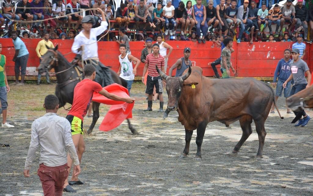 Ley declararía patrimonio cultural corrida de toros de El Seibo -  DiarioDigitalRD